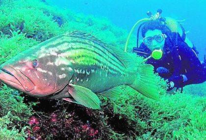 fauna marina paque natural cabo de gata